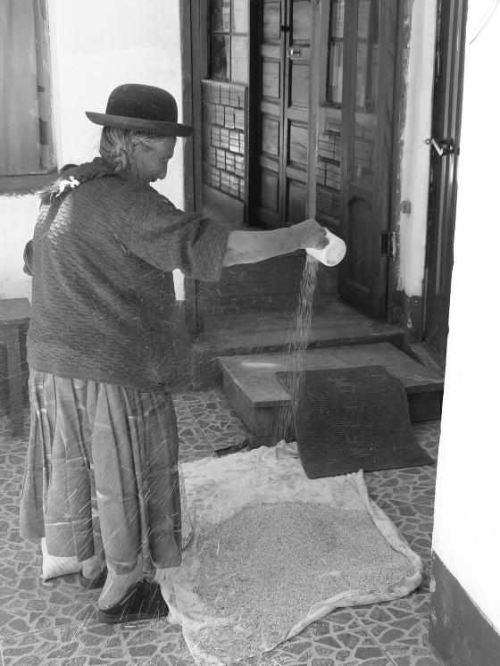 Mujer limpiando grano de quinua